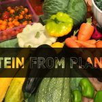 Protein from plants